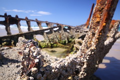 Barnacles and rust.