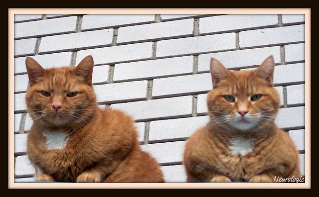 100_3641 Bailey & Jake