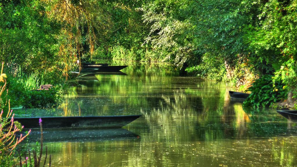 sous bois dans le marais poitevin