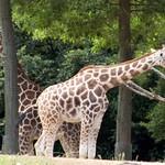 Woodland Park Zoo Seattle 041