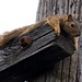 Small photo of Squirrel Lounge