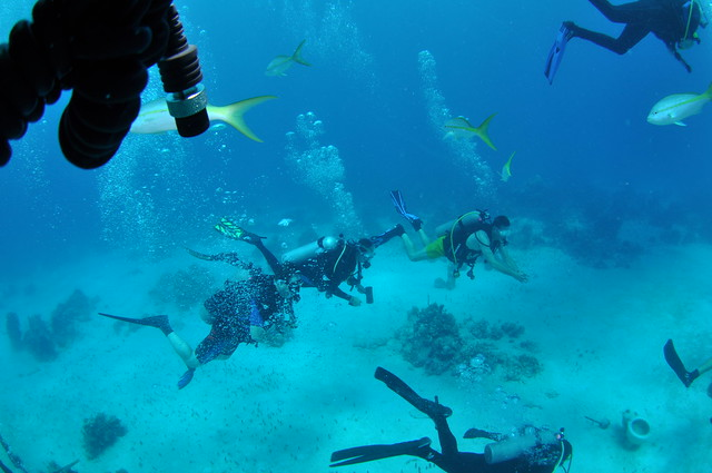 work as a scuba dive instructor to earn money abroad