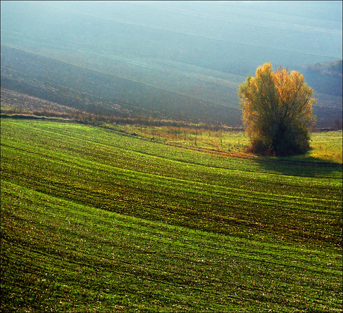 autumn sunset tree green film nature fog landscape photography golden nikon europe peace image serbia paisaje fields paysage priroda valleys vojvodina srbija tájkép vajdasag pejzaž katarinastefanovic katarina2353 gettylicense