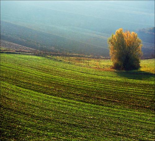 autumn sunset tree green film nature fog landscape photography golden nikon europe peace image serbia paisaje fields paysage priroda valleys vojvodina srbija tájkép vajdasag pejzaž katarinastefanovic katarina2353 gettylicense