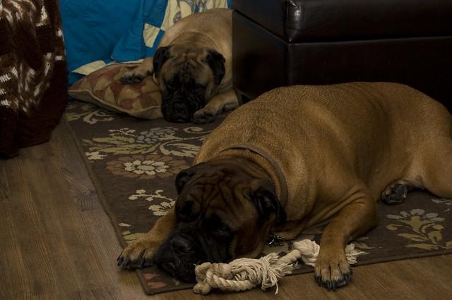 Gentle Giants Dog Rescue Uk