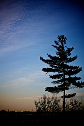 blue portrait sky tree sunrise outdoors ottawa