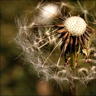 Still Nature's Finest ......