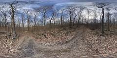 Boyd Big Tree Preserve
