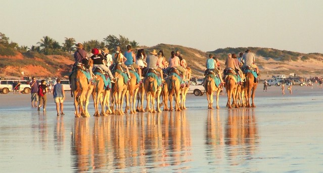 Camels on the Beach at Cable Beach Broome Western Australia