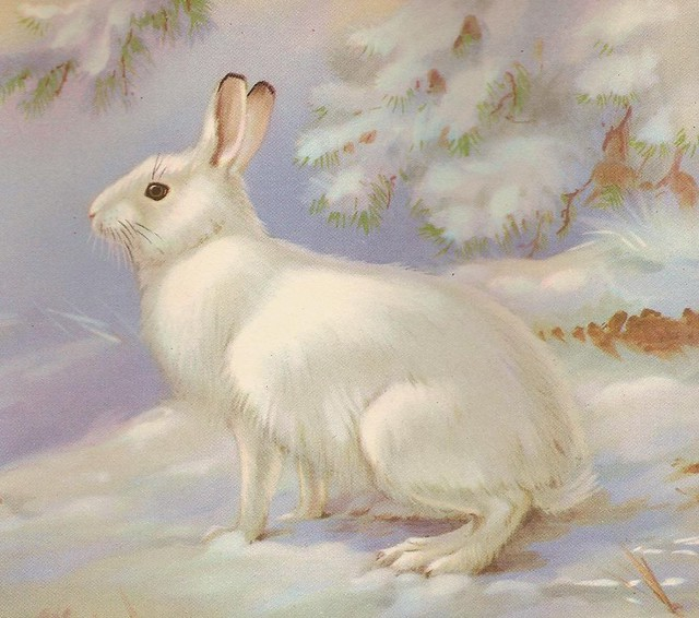 1934 The SNOWSHOE Rabbit Changes Illustration Color Plate