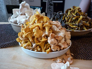Wild Finnish mushrooms