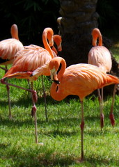 Flamingos Standing in Jerusalem's Biblical Zoo by ForestForTrees, on Flickr