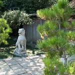 Guardian Lion in Japanese Gardens at Huntington Gardens Pasadena California