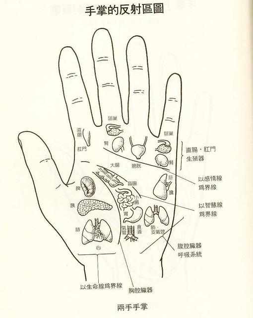 穴位图7 两手手掌 手掌的反射区图