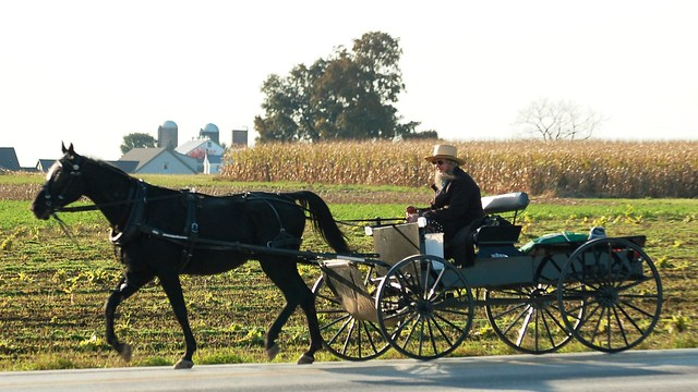 the amish way of life essay The amish in the us and canada: since 1900 sponsored link see the previous essay for developments before the year 1900 developments during the 20th century: writing and mathematics posed a real threat to the amish way of life and to church teaching on humility.