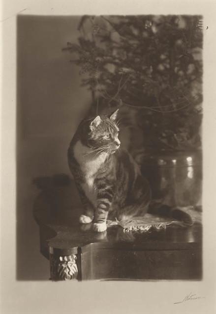 Notman cat.jpg