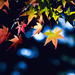 Autumn Leaves by QUIZ.CHANG