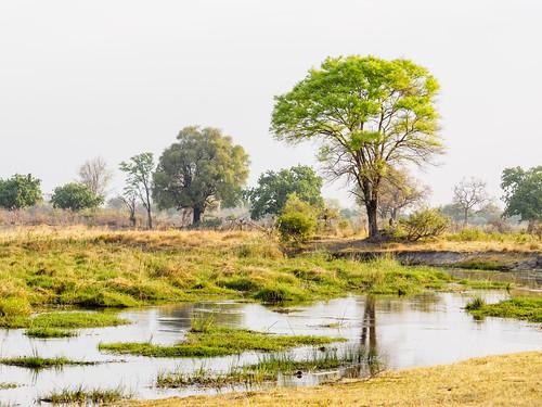 bwabwatacamp caprivi kwandocoreaeria namibia paysage nature octobre zambeziregion namibie