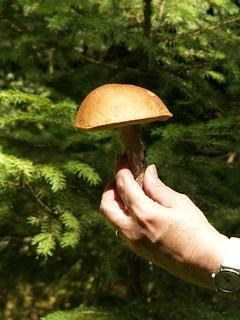 Pilze im Vogtland Wald sammeln oder einen Bär jagen 285