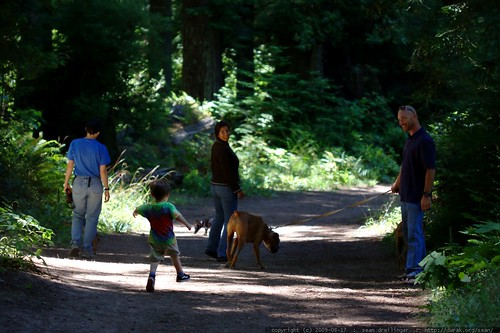walking in the humboldt redwoods    MG 1113