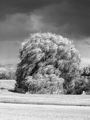 tree airport windy willow grr viewingarea geraldrfordinternationalairport