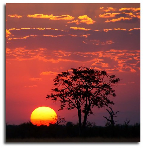 africa sunset sky sun tree clouds sunrise photo photographer sony safari sillouette botswana acacia a700 chadgalloway