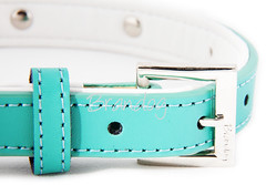 turquoise, collar, aqua, dog collar, leather, turquoise, teal, azure, belt,
