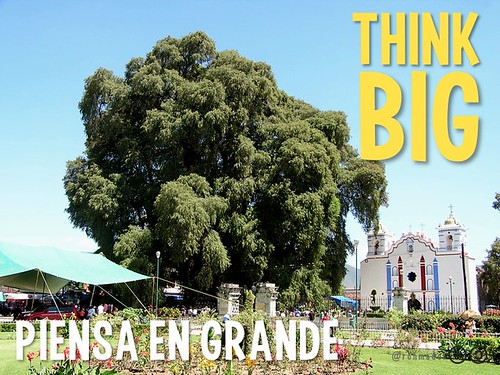 Think Big! The second Monday in October is ... Tule Tree Day!