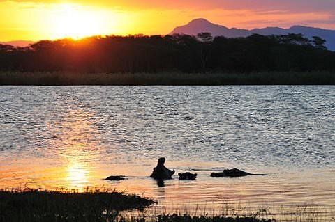 africa sunset peace malawi hippos sundowner mvuu shireriver