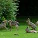 Fighting Bunnies by arndt_100