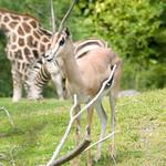 Woodland Park Zoo Seattle 039