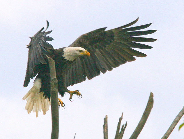 EagleLanding20091001