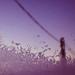 Dreamers by sanne ahremark