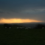 Sunset and sheep on Westbury Hill, Bratton Downs, Westbury, Wiltshire, South West England