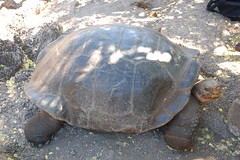 animal, turtle, box turtle, reptile, marine biology, fauna, tortoise,