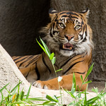 Woodland Park Zoo Seattle 052