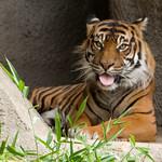 Woodland Park Zoo Seattle 053
