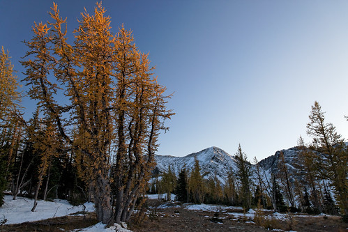 larches manningpark mtfrosty frostyloop