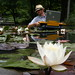 nathaniel stern scanning water lilies by nathaniel s