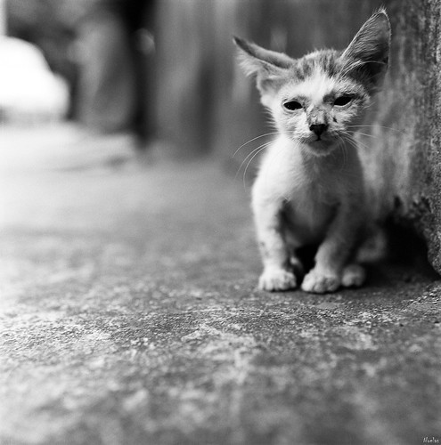 Không nên cho mèo con uống sữa bò