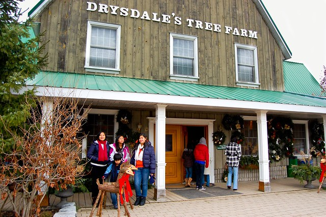 Drysdale's Christmas Tree Farm in Essa, Ontario