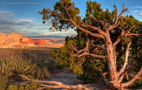 Redrock & Tree HDR