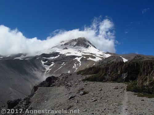Trail up Gnarl Ridge below Mt. Hood, Oregon