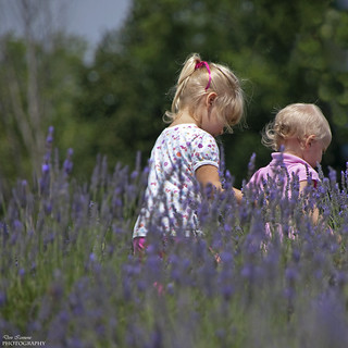 Playing in the Lavender