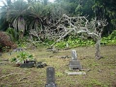 Cemetery by Hana