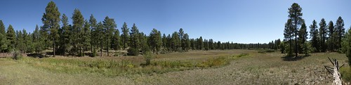 arizona panorama landscape meadows whitemountains springs wetlands bigsprings pinetop riparian ponderosapines pinetoplakeside pinetoparizona bigspringsenvironmentalstudyarea