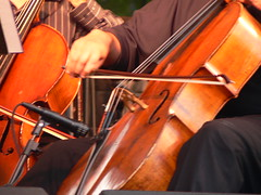 bowed string instrument, violinist, classical music, string instrument, viol, viola, orchestra, music, fiddle, double bass, cello, violist, string instrument,