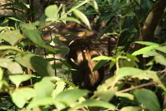 Wild Macaque