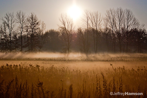 morning trees fall fog sunrise canon foggy sigma rochester 1770 50d sigma1770 canon50d