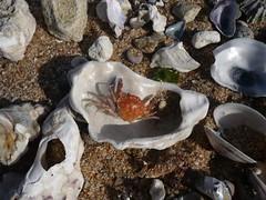 Muscheln Steine Quallen
